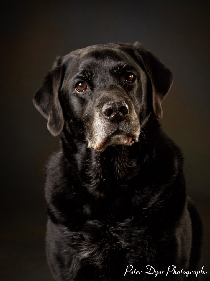Pet Photography by Peter Dyer Photographs 006