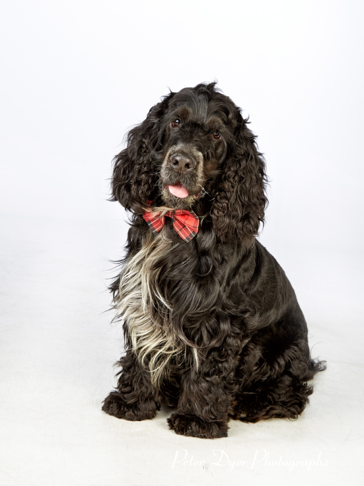 Pet Photography_by Peter Dyer Photographs001