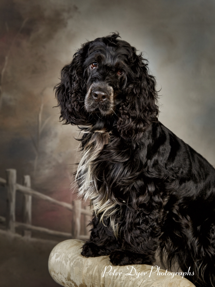 Pet Photography_by Peter Dyer Photographs002