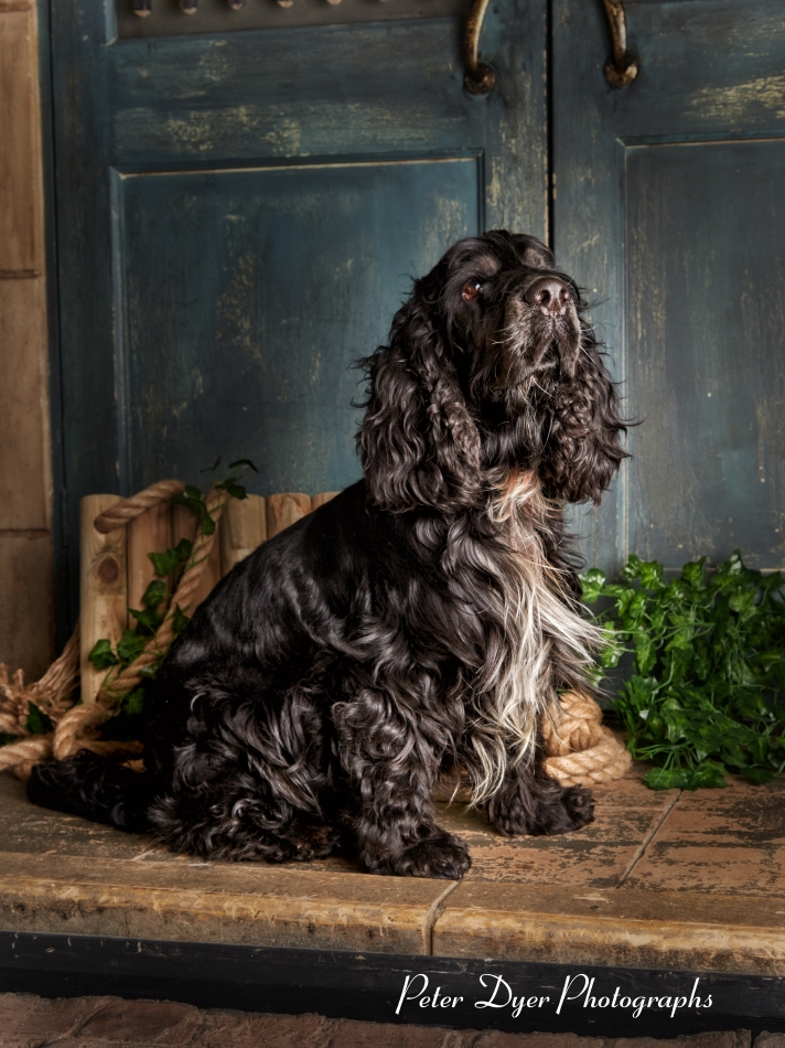 Pet Photography_by Peter Dyer Photographs004