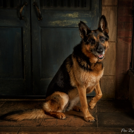 Pet Photography by Peter Dyer Photographs 001