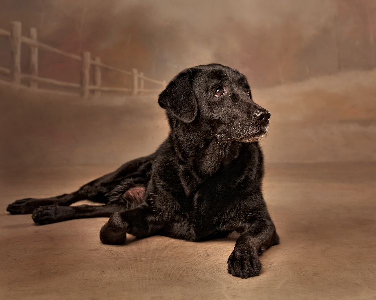 pet-photographer-in-enfield_london
