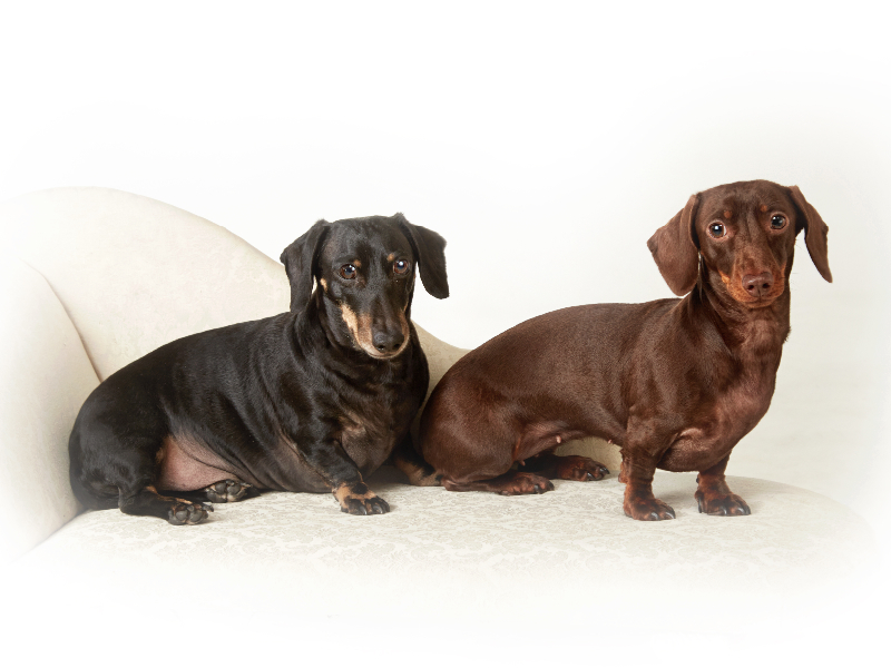 pet-photographer-in-enfield_096