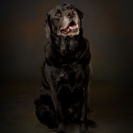 Pet Photography by Peter Dyer Photographs 007