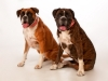 Pet photography_by Peter Dyer Photographs Enfield town