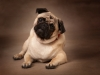 Pet photography_by Peter Dyer Photographs Enfield town_4