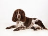 pet-photographer-in-enfield_081
