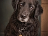 pet-photographer-in-enfield_092