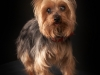 pet-photographer-in-enfield_099