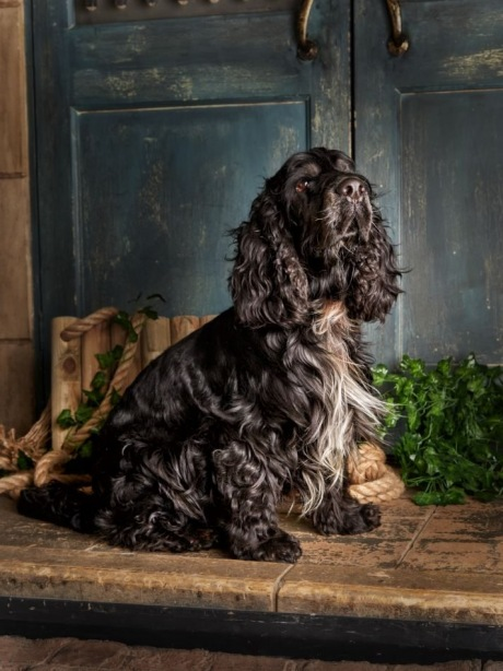 Pet-Photography-by-Peter-Dyer-Photographs-018