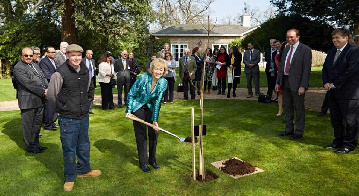 Andrea Ledsom Gardening